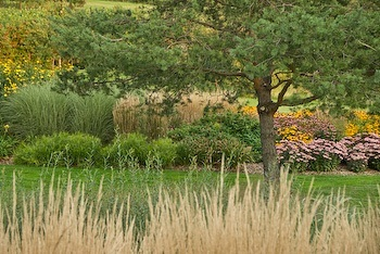 Country Garden Planting Ideas