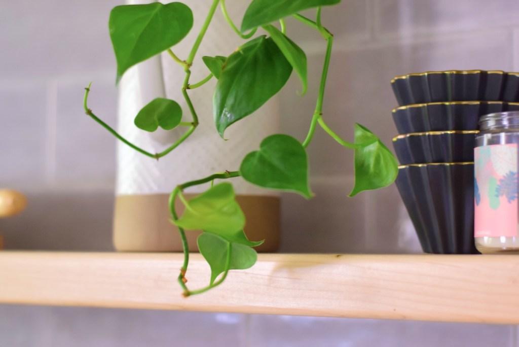 kitchen-updates-plants