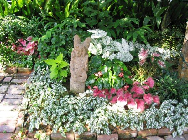 plants shady areas
