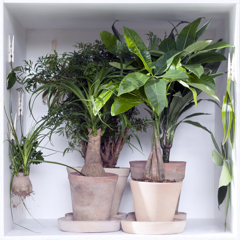 January 2016 indoor trees are the Houseplants of the
