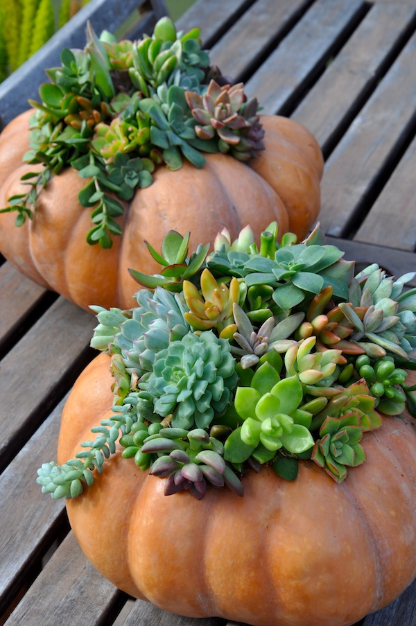 Succulent Pumpkin Final