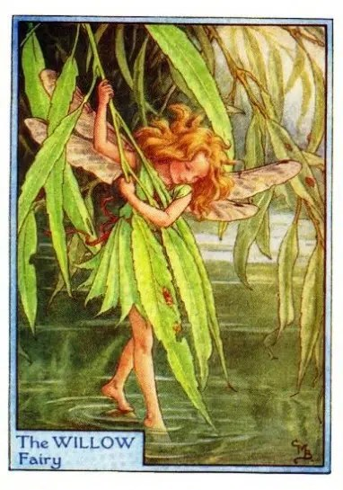 Willow Tree Flower Fairy Flower Fairy Prints Vintage