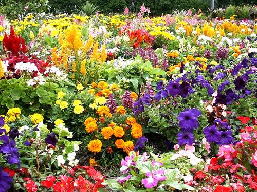 Image result for flower garden images