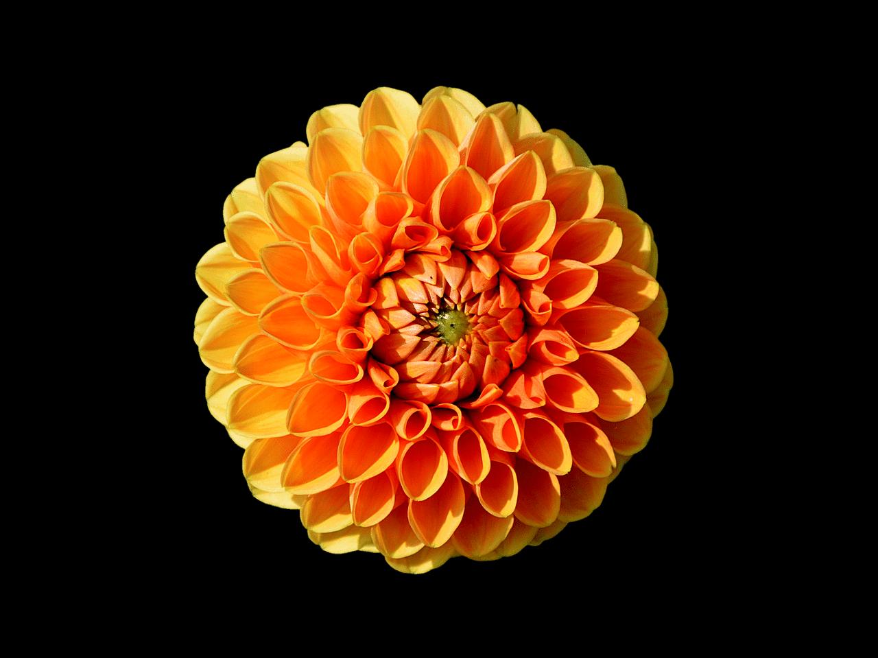 22 types of orange