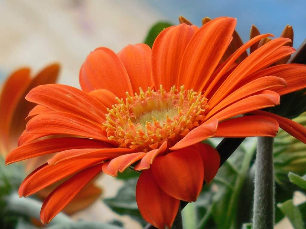 22 Types Of Orange Flowers Pictures