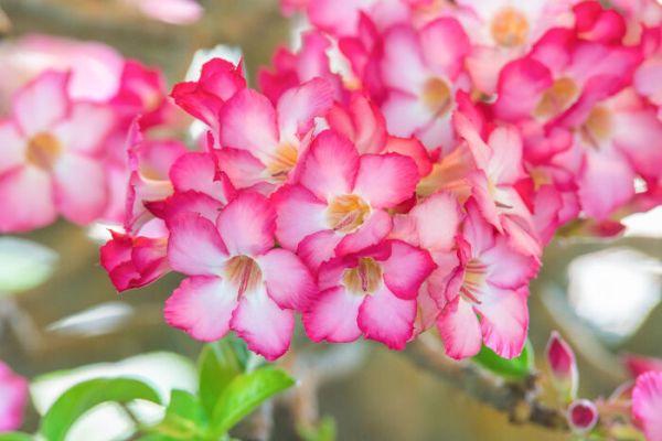 Image result for azalea