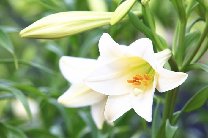 may birth flower flower