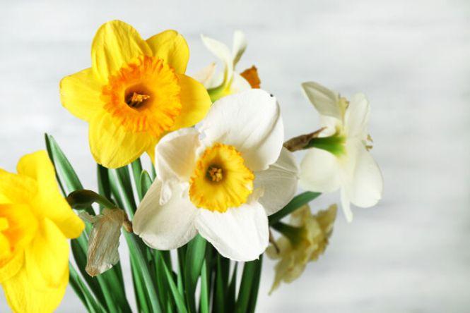 narcissus flower  flower, Natural flower