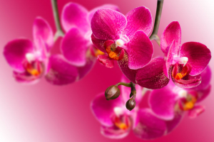 Orchid Flower Meaning  Flower Meaning