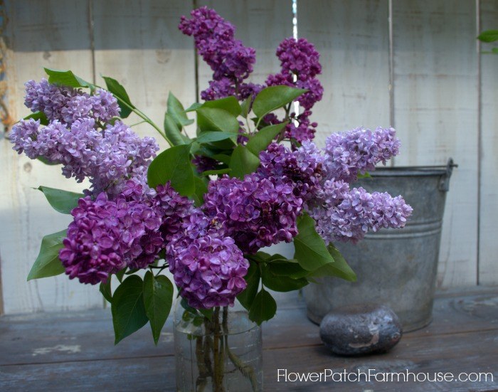 How to Propagate Lilacs by cuttings, FlowerPatchFarmhouse.com