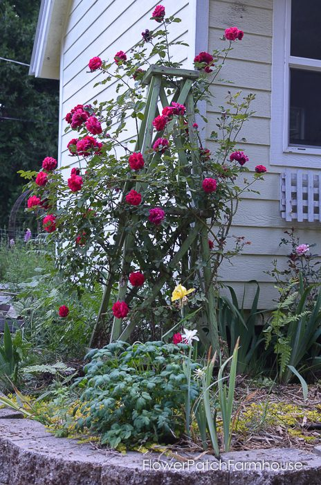 make an easy garden obelisk 2 flower patch farmhouse. Black Bedroom Furniture Sets. Home Design Ideas