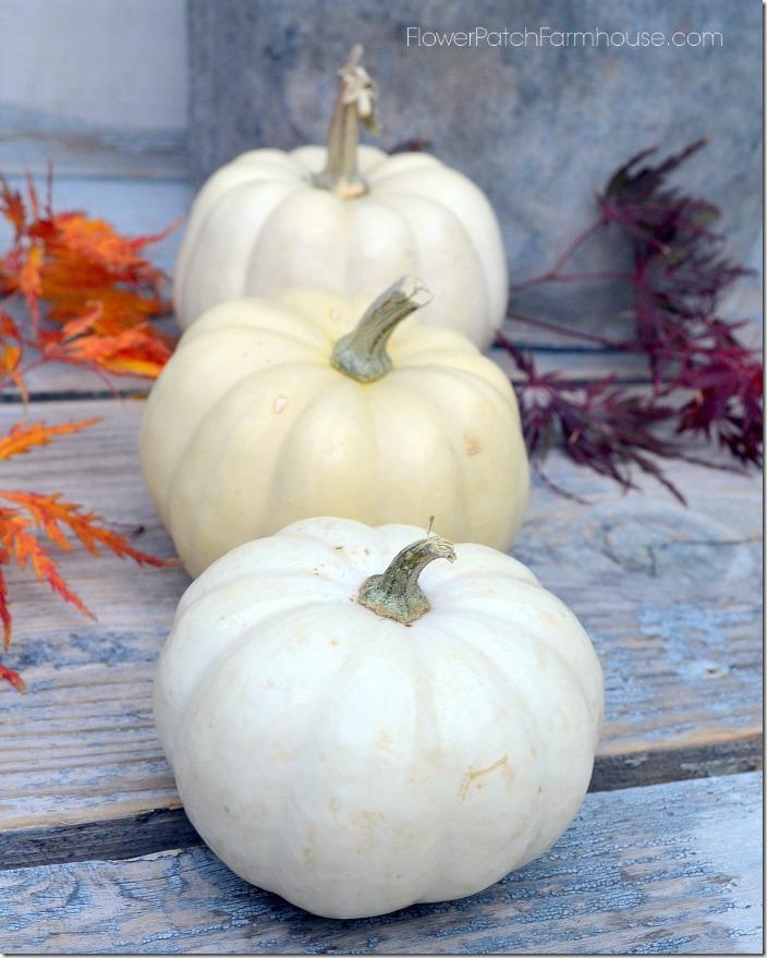 croppedwhite pumpkins700