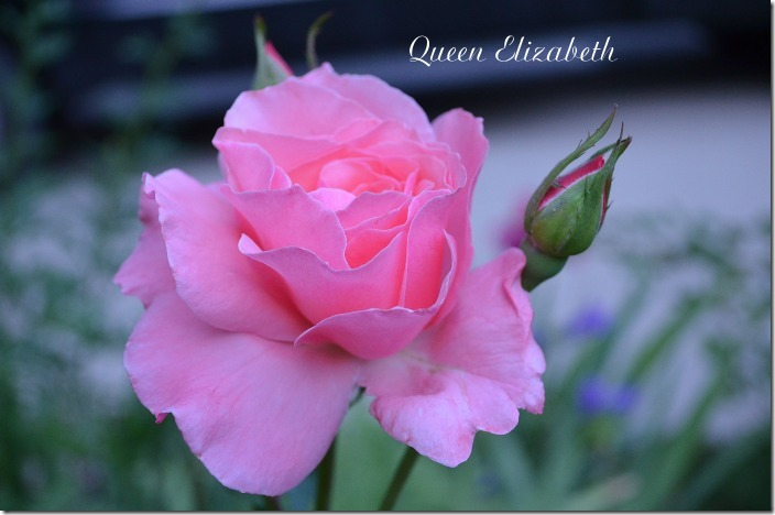 Queen Elizabeth7