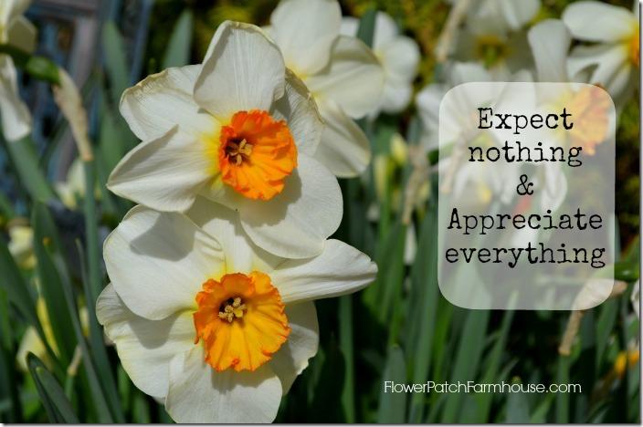 Monday Inspiration daffodils