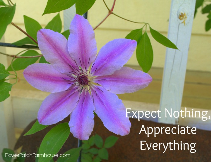 Nelly Moser clematis with quote
