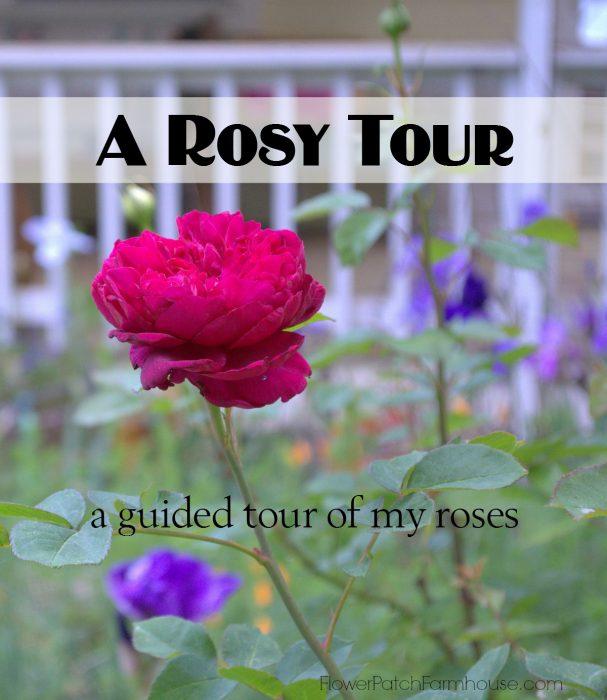 A few roses in my garden!