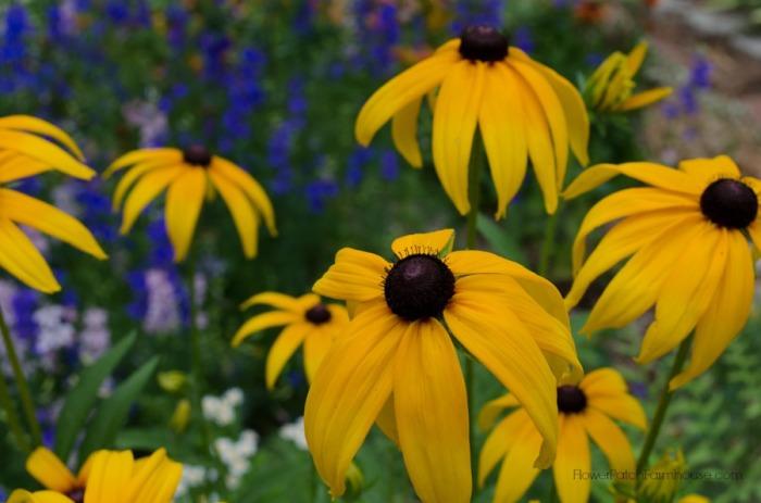 Black-Eyed-Susan-yellow-FlowerPatchFarmhouse.com_.jpg