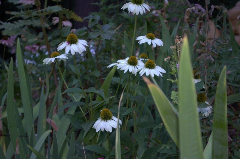 white swan, FlowerPatchFarmhouse.com
