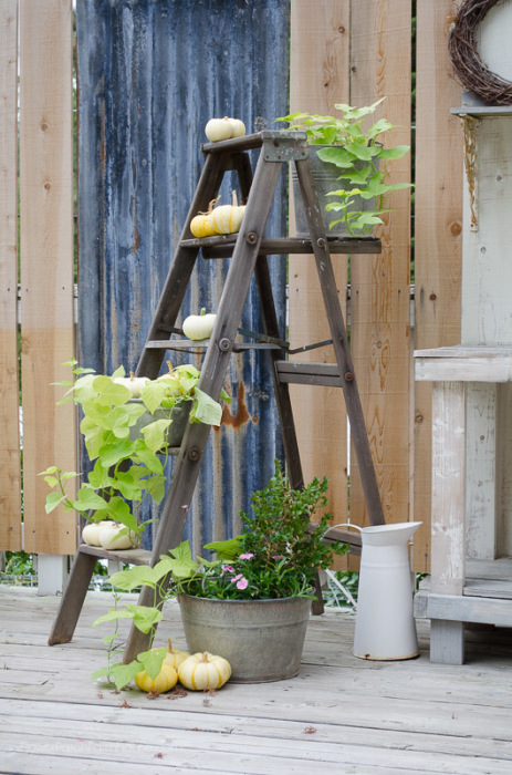 a Rustic Ladders and Some Pumpkins, FlowerPatchFarmhouse.com