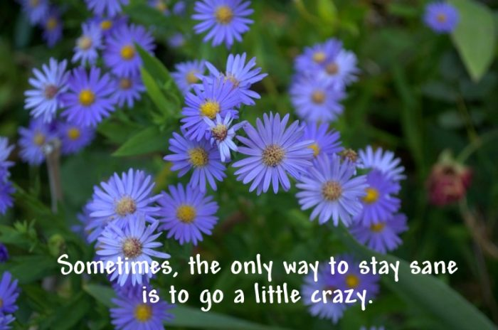 Only way to stay sane is to go crazy quote, FlowerPatchFarmhouse.com