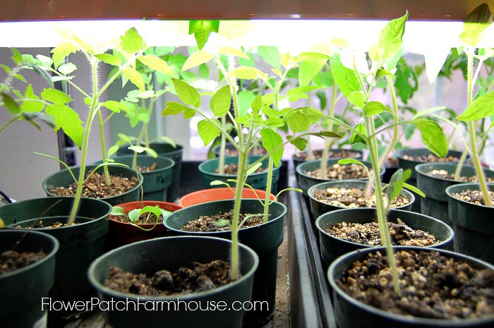 How to Start Seeds for a Beautiful Garden
