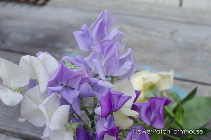 July Garden walk, FlowerPatchFarmhouse.com (40 of 40)