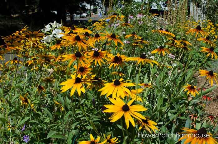 Garden Tour Aug 3, 2015, FlowerPatchFarmhouse.com (12 of 12)