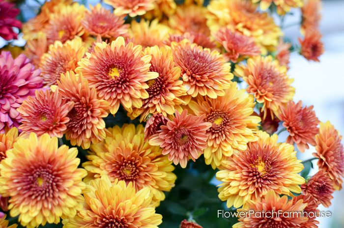 Fall in the Garden, FlowerPatchFarmhouse.com (3 of 10)