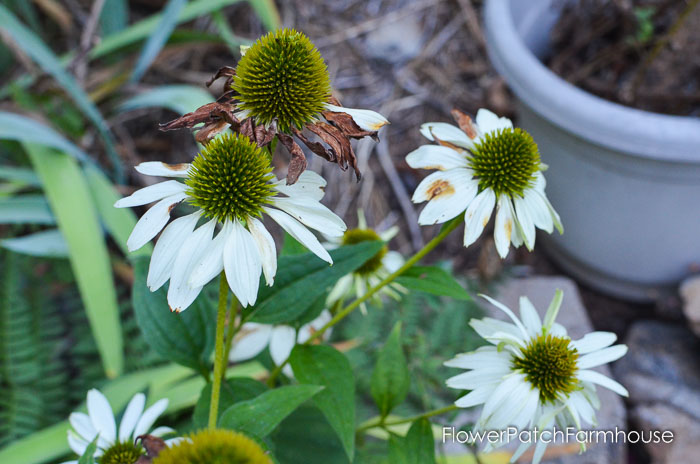 September 19 garden walk, FlowerPatchFarmhouse.com-0020