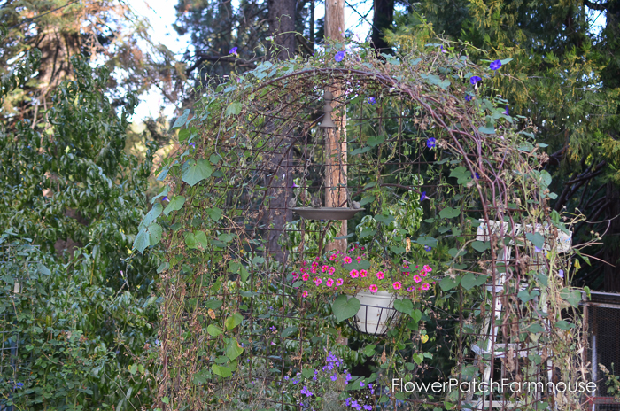 Arbor in the Secret Garden