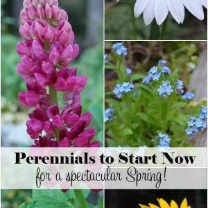 Fabulous Perennials that are easy to start from seed. Best planted in Fall for early Spring blooms. Get started on your flower garden NOW! FlowerPatchFarmhouse.com