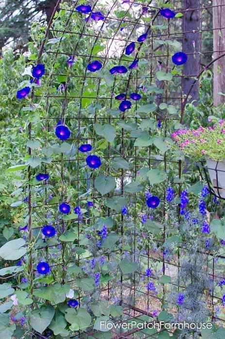 Garden Tour Aug 2, 2015, FlowerPatchFarmhouse.com (29 of 40)