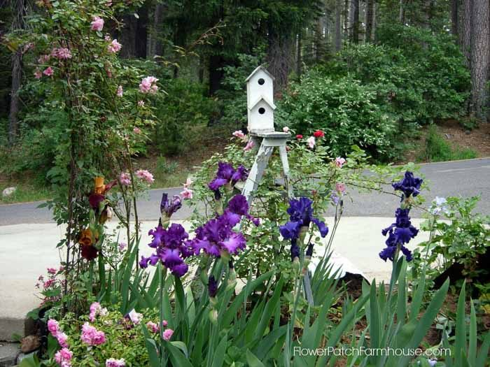 Lazy Gals Garden Guide, how to have a gorgeous garden with little effort, FlowerPatchFarmhouse.com-3