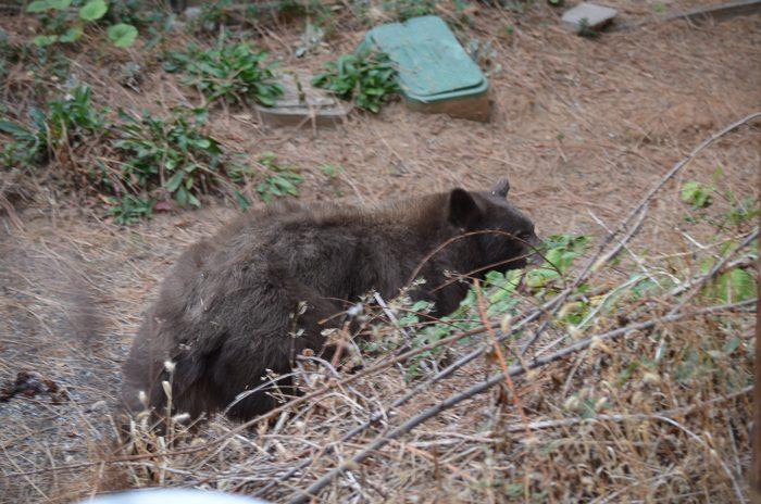 Mr. Bear, FlowerPatchFarmhouse.com (8 of 9)