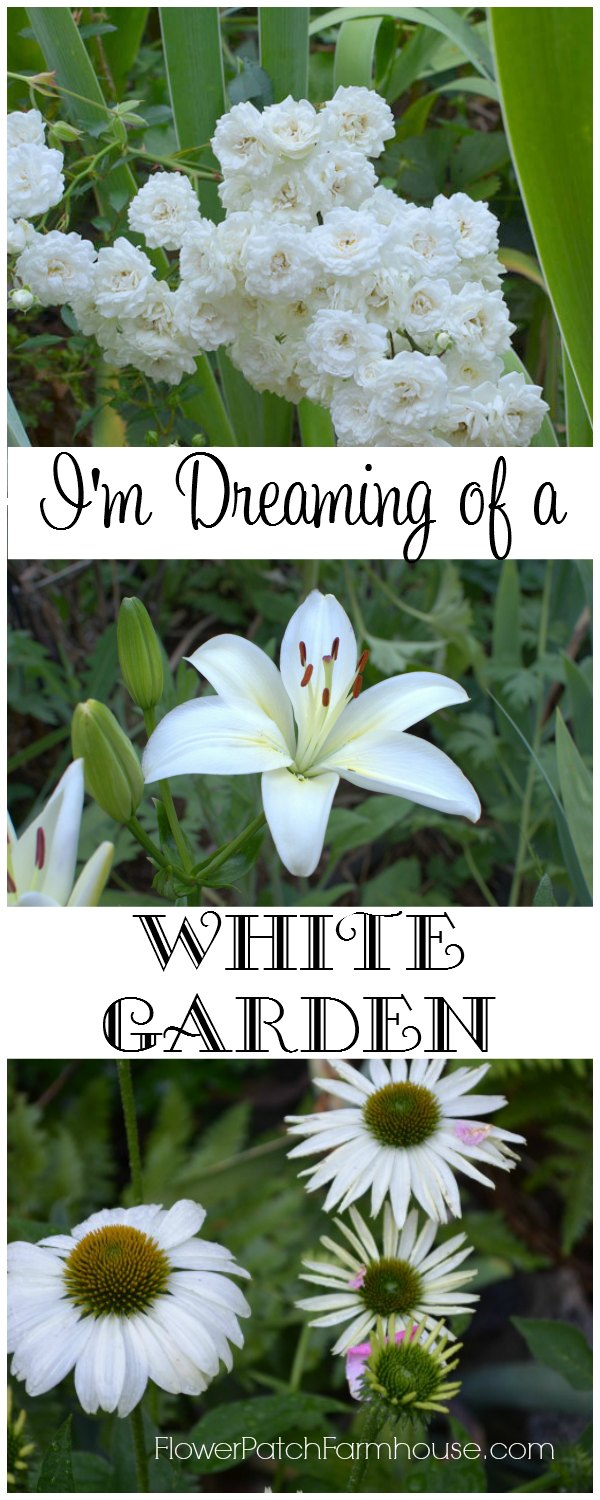 Planting white flowers in the garden adds a calming influence and an accent to all the bright colors vying for attention.