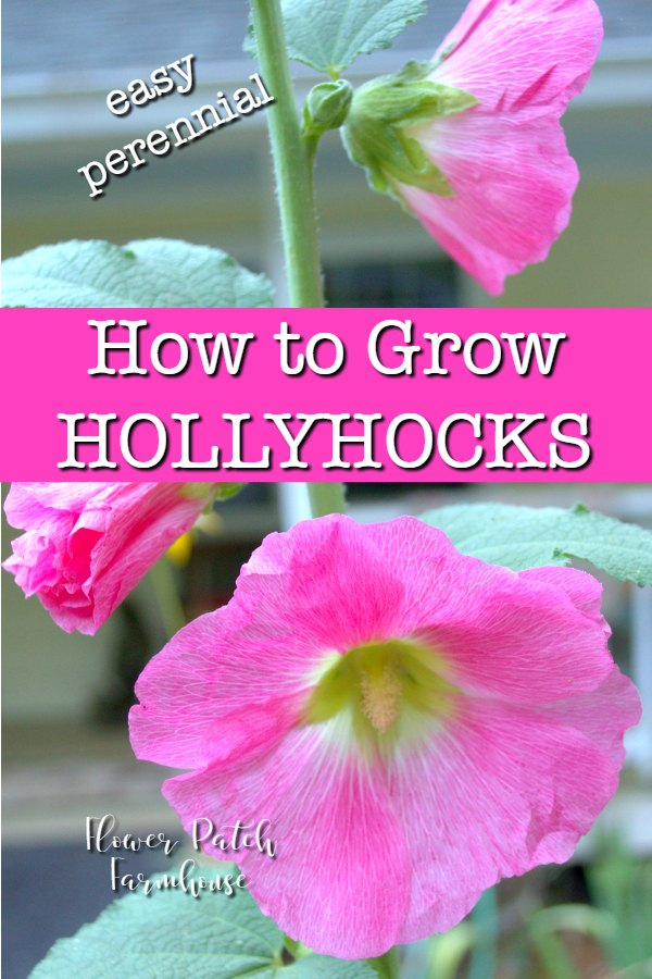 Pink hollyhocks with text overlay, How to Grow Hollyhocks, Flower Patch Farmhouse