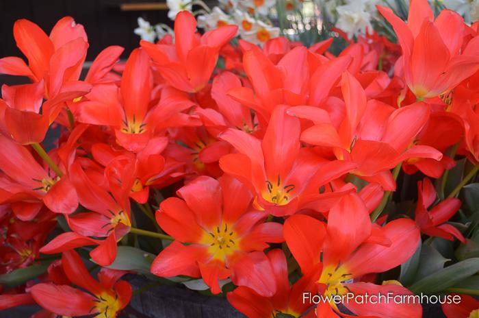 Ironstone March 2016, FlowerPatchFarmhouse.com (26 of 77)