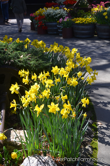 Ironstone March 2016, FlowerPatchFarmhouse.com (4 of 77)