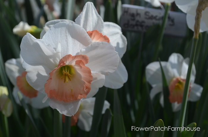Ironstone March 2016, FlowerPatchFarmhouse.com (44 of 77)