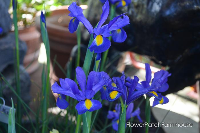 Ironstone March 2016, FlowerPatchFarmhouse.com (61 of 77)