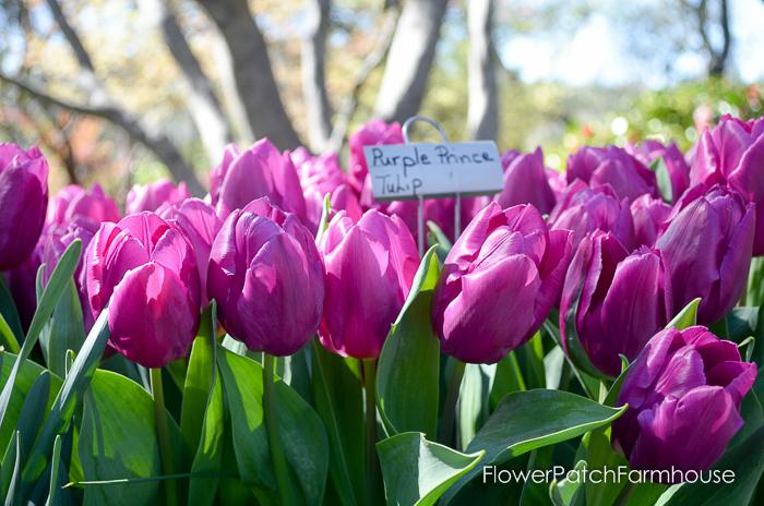 Ironstone March 2016, FlowerPatchFarmhouse.com (8 of 77)