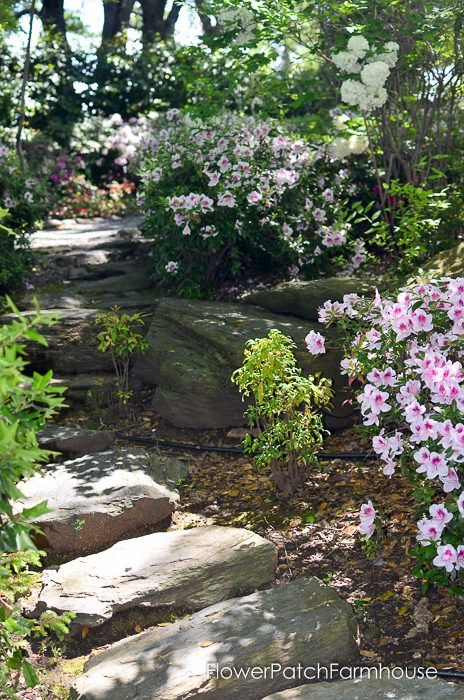 Azaleas at Ironstone Winery