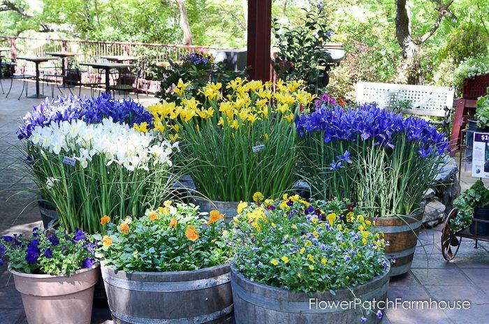 Dutch Iris, Ironstone Winery
