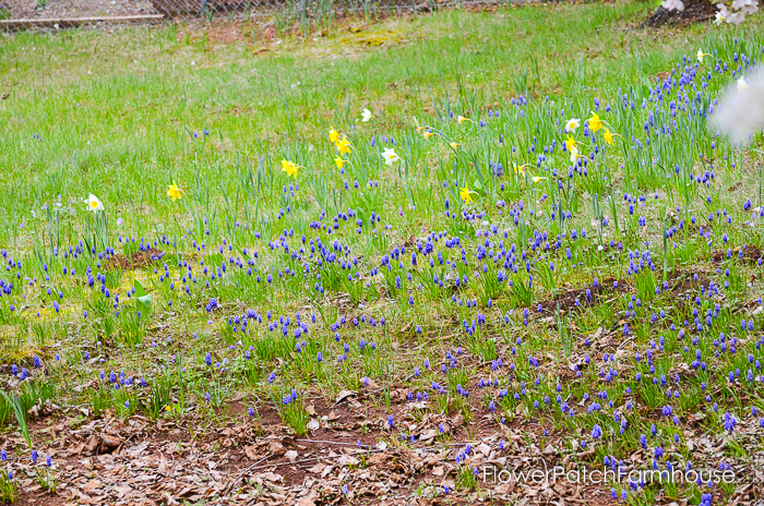 Spring in White Pines April 2016, FlowerPatchFarmhouse.com (21 of 60)