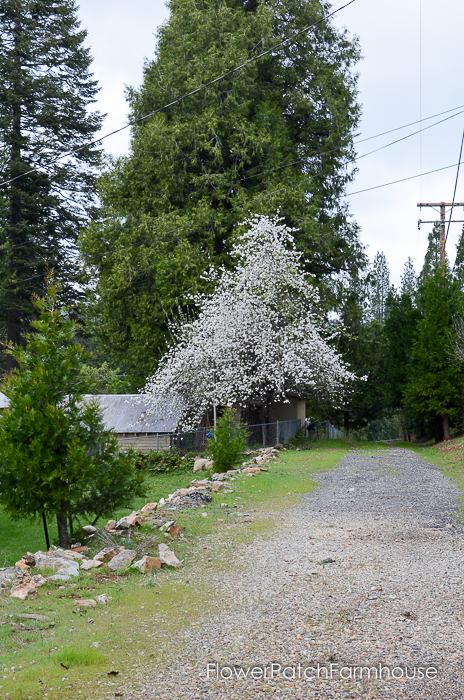 Spring in White Pines April 2016, FlowerPatchFarmhouse.com (49 of 60)