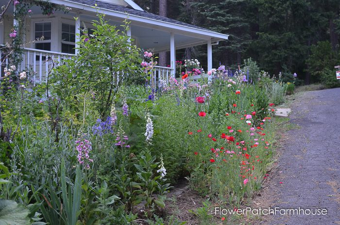 Plant your Garden for Continuous Color