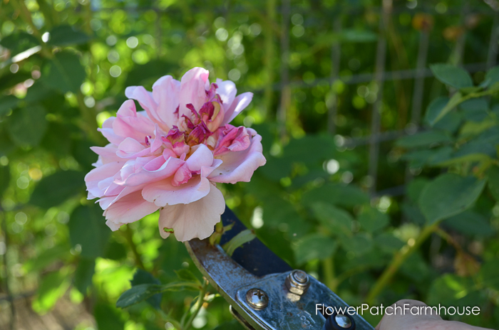 How to deadhead flowers for continuous bloom all summer long, deadheading is the ticket