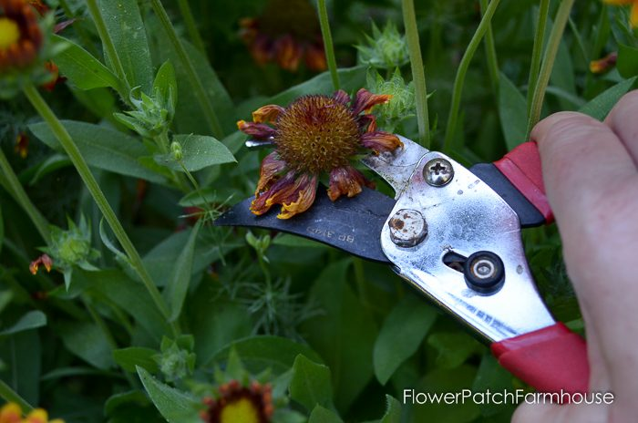 How to deadhead flowers for continuous bloom all summer long,
