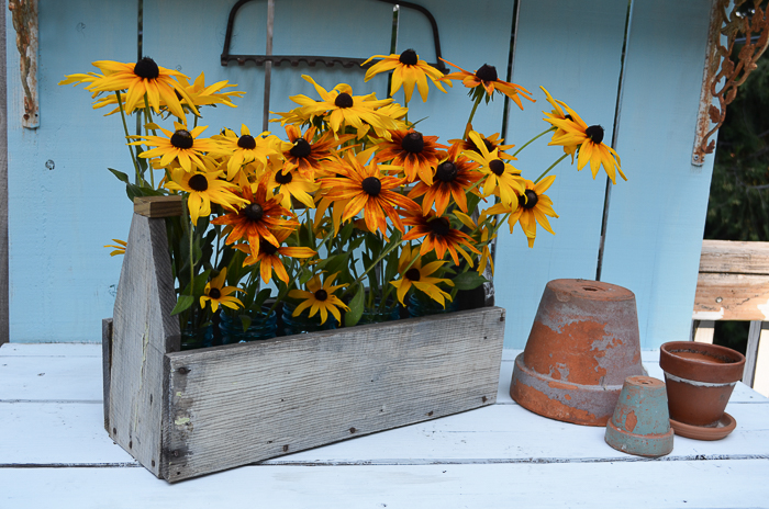 ate Summer Garden 2016, Black Eyed Susans