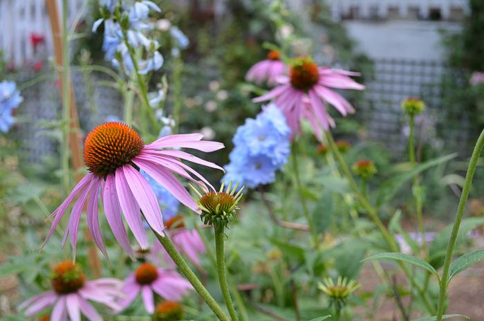 Late Summer Garden 2016